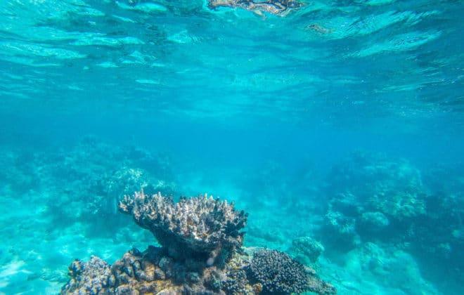 Récif dans la barrière de Corail