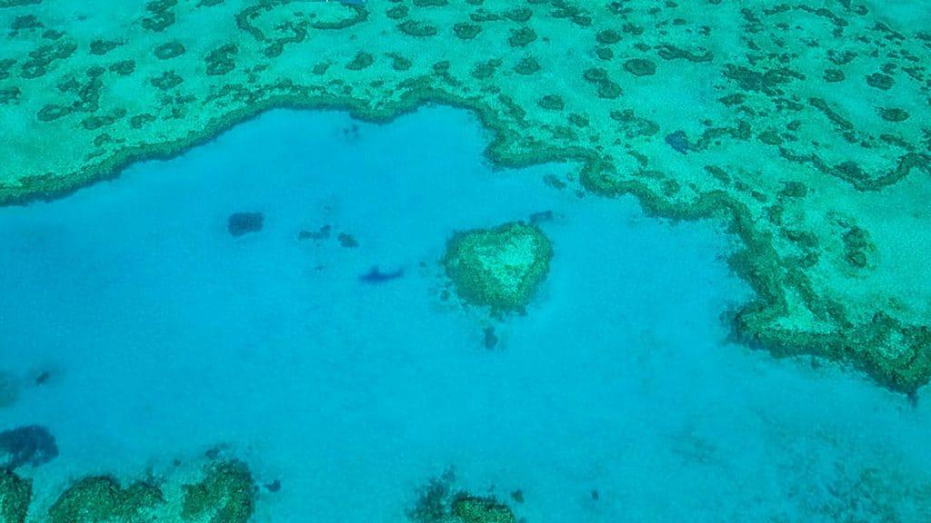 Le Récif Coeur dans la Grande Barrière de Corail