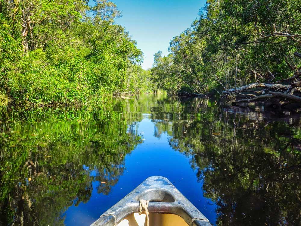 Tour en canoë dans les everglades de Noosa
